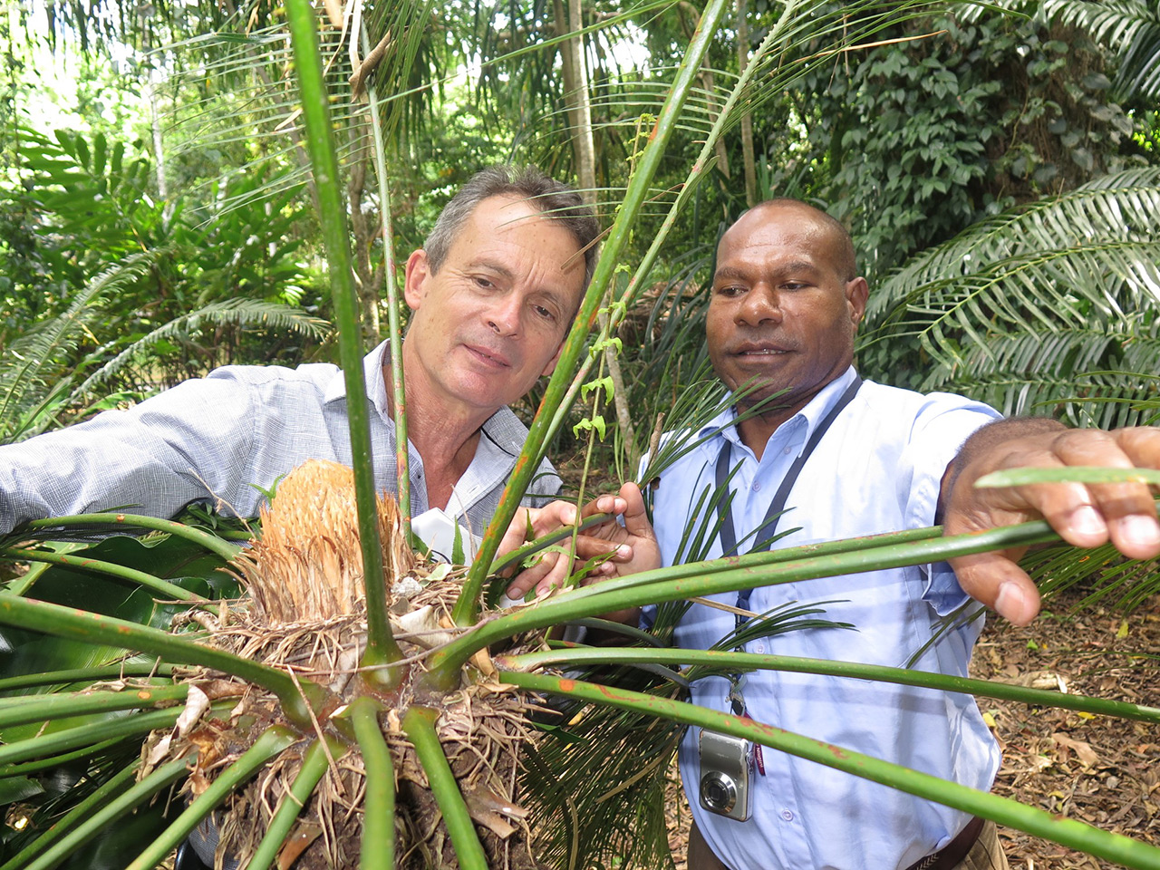 Lae-Botanic-Gardens-Curator-Michael-Lovave-explores-the-Cairns-Botanic-Gardens-with-his-Cairns-counterpart-David-Warmington._1
