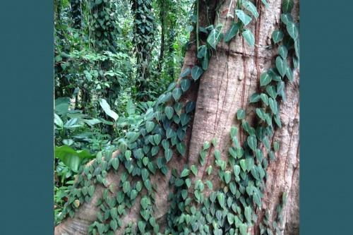 Lae-Botanic-Gardens_Advancement-Program_113.jpg