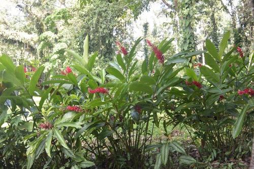 LBG-Flora9.jpg