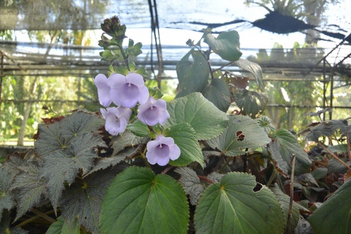LBG-Flora18.jpg