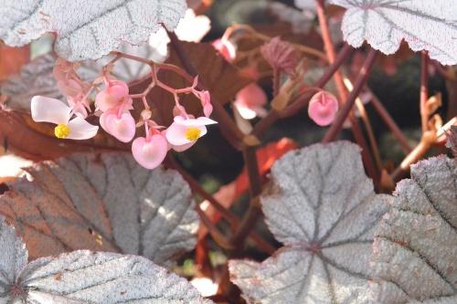 LBG-Flora24.jpg