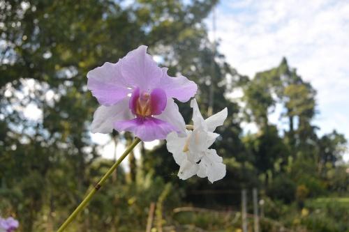 LBG-Flora28.jpg