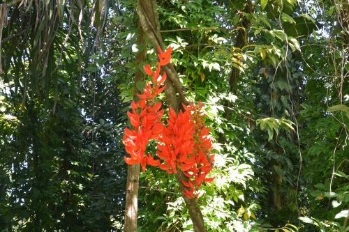 LBG-Flora49.jpg