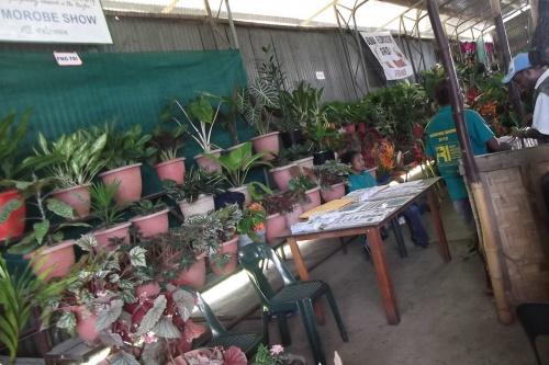 Lae-Botanic-Gardens-Staff_Morobe-Show.jpg