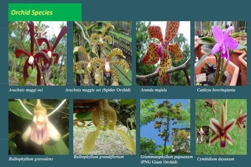 Plants-in-Gardens-2015_2.jpg