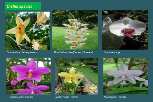 Plants-in-Gardens-2015_3.jpg