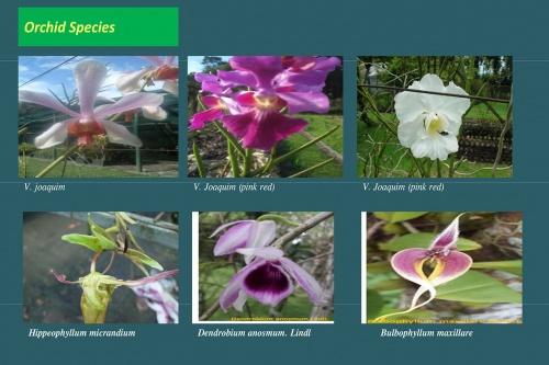 Plants-in-Gardens-2015_4.jpg