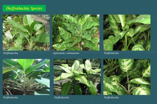 Plants-in-Gardens-2015_7.jpg