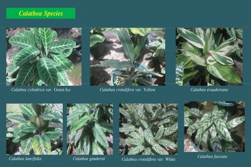 Plants-in-Gardens-2015_8.jpg