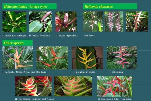 Plants-in-Gardens-2015_11.jpg