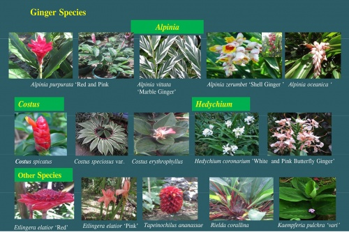 Plants-in-Gardens-2015_12.jpg