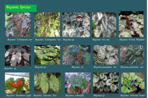 Plants-in-Gardens-2015_13.jpg