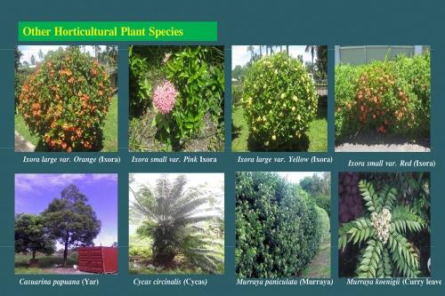 Plants-in-Gardens-2015_20.jpg