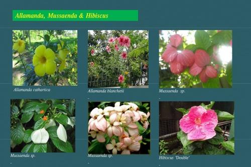 Plants-in-Gardens-2015_21.jpg