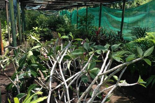 Lae-Botanic-Garden_Nursery_1.jpg