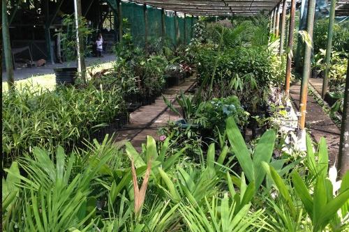 Lae-Botanic-Garden_Nursery_2.jpg