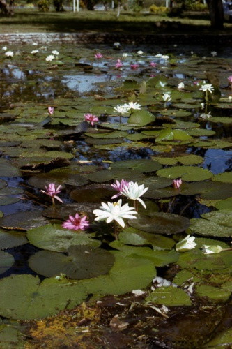 Beautiful-Lily-Pond-Lae-l974_Bev-Melrose.jpg