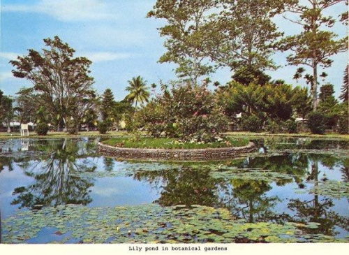 Botanical Gardens Lae as it was_Bev Melrose.jpg