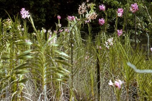 Gardens-Lae-early-70's_Bev-Melrose.jpg