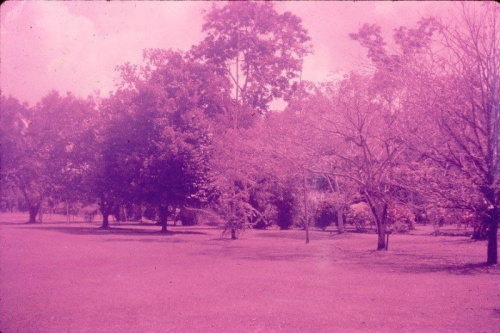 Lae Botanic Gardens_Sept1967_2_from Jon and Jan Hamilton.jpg