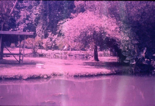 Lae Botanic Gardens_Sept1967_from Jon and Jan Hamilton.jpg