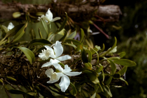 Orchids Gardens Lae 1976_Bev Melrose.jpg